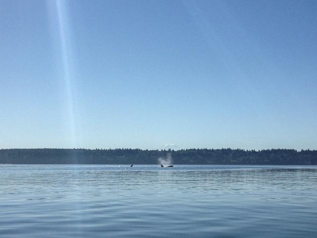 orcas and Rainier