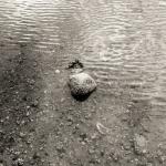 low-tide-02